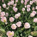 Nikita Botanical Gardens照片