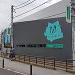 涩谷猫街照片