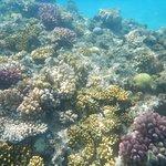 Faune sous-marine : coraux multicolors