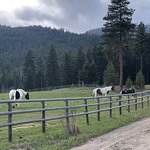 Hanging out with the horses at Triple Creek Ranch