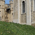 Spring flowers at the Tower of London