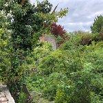 Foto Beanstalk Tea Garden