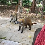 Wildlife was not lacking here. These Coati's were very eager to say hello!