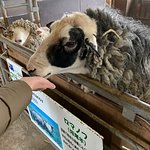 World Sheep Museum ภาพถ่าย