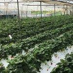 草莓都剩下不多,而草莓的體積大多不會很大