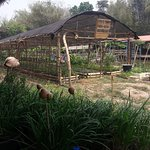 Give Green Farm House Restaurant