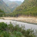 対岸の熊野杉