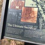 Big Stump Basin - information