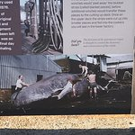 Albany's Historic Whaling Station Photo