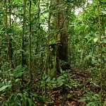 Sights during your walking tours in the rainforest