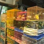 Bird Market Kowloon