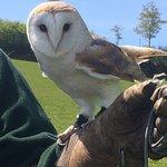 Miranda the barn owl