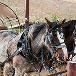 Wild West Wagons.