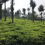 Gambar Connemara Tea Factory
