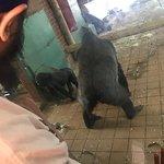 Valokuva: Twycross Zoo