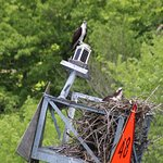 Just one of several osprey nests that we sailed past.