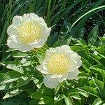 Whetstone Park / Park of Roses