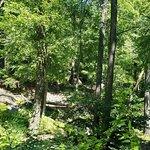 Bear Mountain State Park Foto