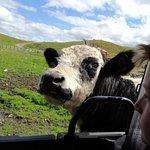 Farm buggy tours Resmi
