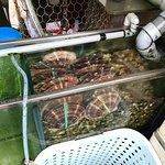 竹园海鲜饭店照片