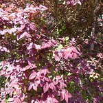 Fabulous foliage.