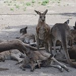 Gan Garoo - Australian Park