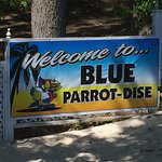 Blue Parrot Grill照片
