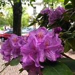 Netter Blumenschmuck ziert das Restaurant