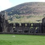 Llanthony Priory with sheep - late April