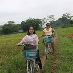 cycling throuth rice paddies fields
