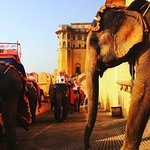 Enjoy Elephant safari with us