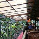 ภาพถ่ายของ Hornbill restaurant and cafe