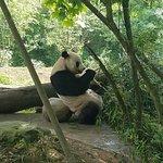 China Highlights Panda Keeper Photo