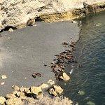 Loberia de Punta Loma Fotografie