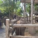 Great seeing the elephants laugh