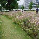 Hokkaido Ramen Akarenga照片