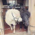Ponies at the pub!