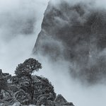 Lone tree amid ruins and swirling fog