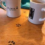 صورة فوتوغرافية لـ 2 cats