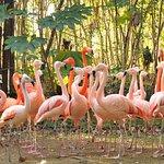 温帯・熱帯の森 フラミンゴ展示場