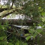 Des barques entre les arbres