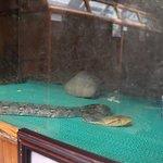 Kind of python
