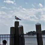 ภาพถ่ายของ Blount Clam Shack on the Waterfront