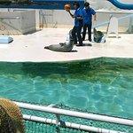 海獣公園アザラシのショー