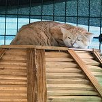 Beautiful Sand Cat Relaxing