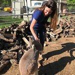 Kangaroo enjoys visitors