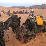 Camel Trekking Excursions Photo