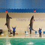 Otaru  Aquarium Foto