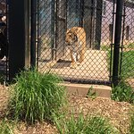 Magnetic Hill Zoo Photo