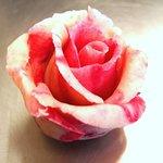 Rose Marzipan